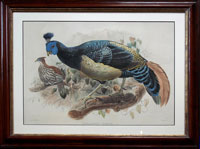 Elliot: Pheasants