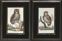 Edwards Owls